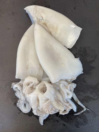 Blanc de seiche Nettoyé Pêche Locale